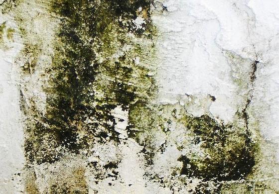 ¿Qué es el moho?